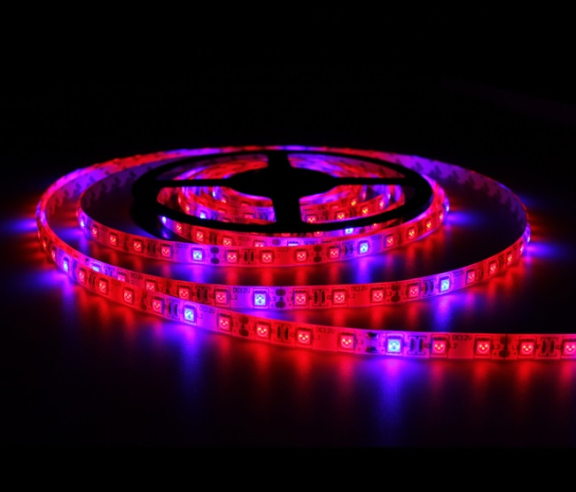 Svetotron SMD 5050RB, 300 Led, IP33, 12V